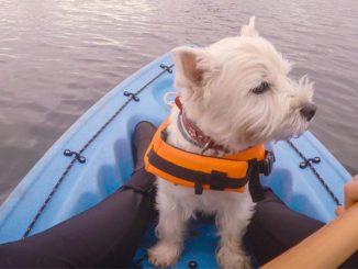 terrier pet on canoe