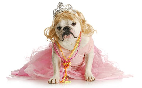 princess bulldog